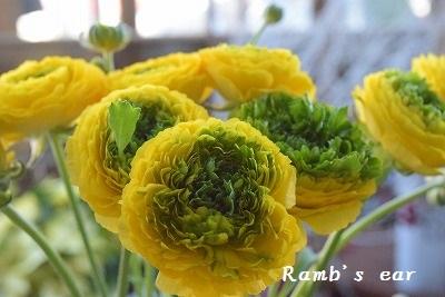 ラムズイヤー・花
