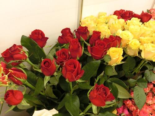 馬場植物園・赤バラ